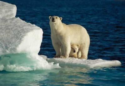 polar-bears_Martha-Holmes